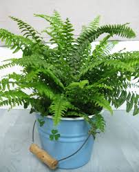 What Is An Indoor Garden Called - 10 common house plants that help clean and filter indoor air