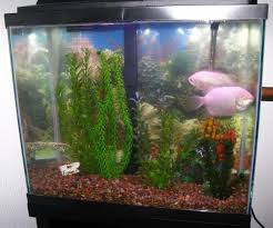 Aquarium Decor Ideas Fish Tank Decor Ideas House Design And Office Fish Tank Ideas