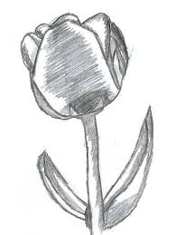 tulip drawing lava by wolfstare5 on deviantart