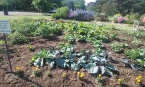 grow local colorado and the harvard gulch park vegetable garden
