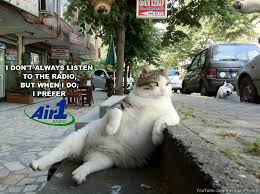 Most Amazing Man In The World Meme - the most interesting cat in the world the most interesting man