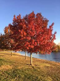 fall colors peak bay area sfgate