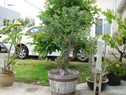 bonsai growing material