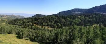 Utah forest images Phenomenon utah habitats grade 4 science at shadow valley jpg