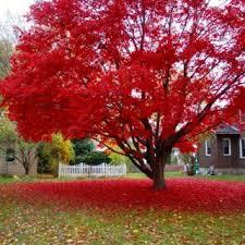 ornamental trees archives houz buzz