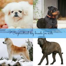 7 impractical dog breeds for kids