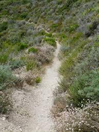 native san diego plants california coastal sage scrub plant community