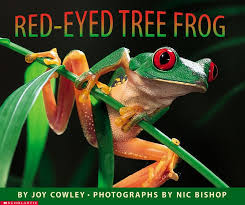 eyed tree frog by cowley scholastic