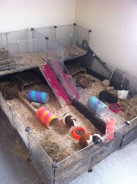 Rabbit And Guinea Pig Hutches Best 25 Cheap Guinea Pig Cages Ideas On Pinterest Cheap Bunny