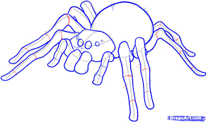 draw an easy spider step by step drawing sheets added by dawn