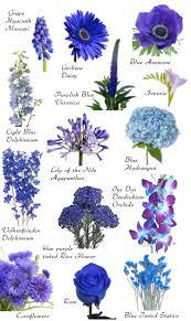 blue wedding flowers best 25 flowers name list ideas on wedding flower blue
