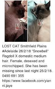 Lost Cat Meme - 25 best memes about lost cat lost cat memes