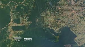 amazon rainforest native plants deforestation of the amazon rainforest wikipedia