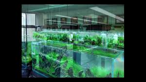 Aquascaping Shop Takashi Amano Nature Aquarium Gallery In Japan Takashi Amano