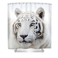 White Tiger Shower Curtain Debra Sabeck Shower Curtains For Sale
