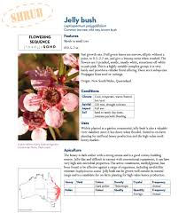 native plants south australia bee friendly a planting guide for european honeybees and