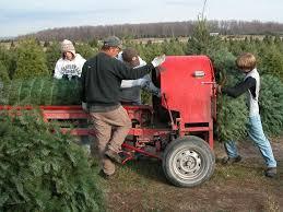 a family christmas tradition u2014 schmuckal christmas tree farms