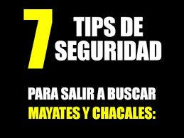 mayates ychacales acapulco boys 7 tips de seguridad para salir a buscar mayates y chacales youtube