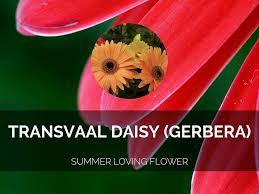 floral design haiku by keasha beatty
