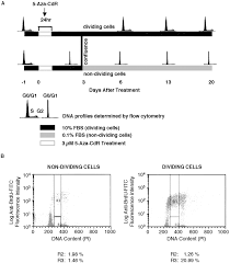 cell division is required for de novo methylation of cpg islands