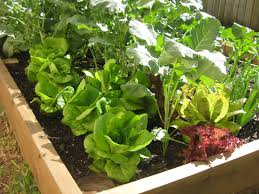 useful websites for florida gardeners gardening websites