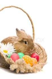 bunny basket eggs festive easter bunny is sitting in a basket with colored eggs