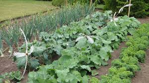 versatile vegetables for fall gardening indiana yard and garden
