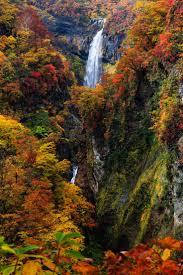 374 best autumn leaves images on pinterest autumn leaves