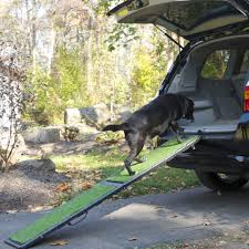 8 gadgets for a dog friendly road trip healthy paws pet insurance