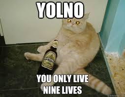 Drunk Cat Meme - yolno you only live nine lives drunk cat quickmeme