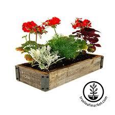window herb garden kit window herb garden grow bottle indoor herb