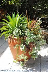 Summer Container Garden Ideas 7 Best Container Gardening Ideas Images On Pinterest