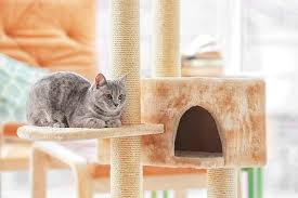 best cat tree for large cat reviews in 2017
