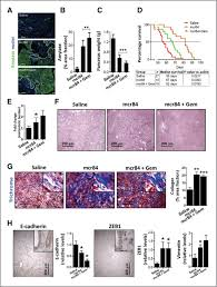collagen signaling enhances tumor progression after anti vegf
