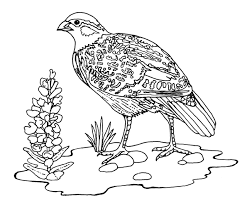 100 ideas grassland coloring sheet for kids on spectaxmas download