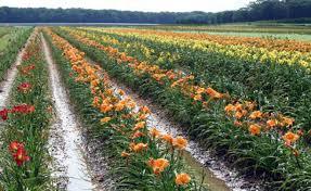 Flower Seeds Online - buy flower seeds online in india buy online plants