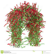 arch with climbing roses stock illustration image 58748129