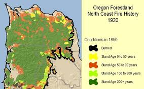 you own oregon s largest known tree let s keep it that way
