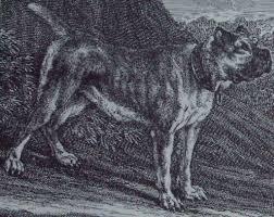 boxer dog 2015 boxer dog breed profile boxer fan club