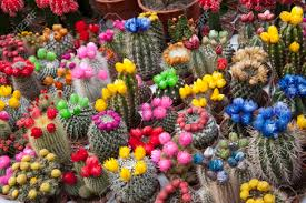 flowers for sale catus flowers on sale in market stall amsterdam stock photo