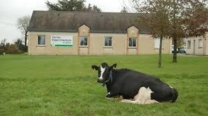 chambre d agriculture nantes à derval les vaches vont chauffer la piscine info nantes maville com