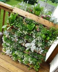 Pallets Garden Ideas 10 Diy Garden Ideas For Using Pallets Hobby Greenhouses