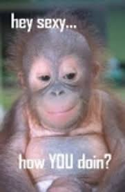 Baby Monkey Meme - men they all say the same thing outdoors pinterest monkey