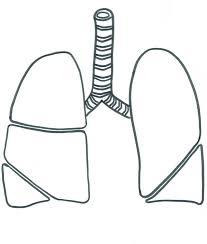 les poumons à colorier tête à modeler