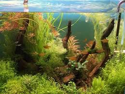 Aquascape Environmental News Page 4 Tannin Aquatics