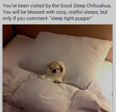 Dog In Bed Meme - sleep tight pupper know your meme