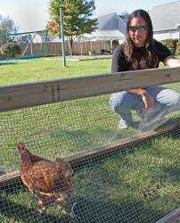 portage ponders relaxing rules on backyard chickens mlive com