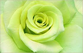 green roses green roses symbolism