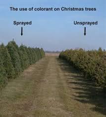 dnr christmas tree selection