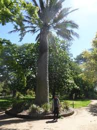 Kyneton Botanical Gardens Kyneton Botanical Gardens All You Need To Before You Go